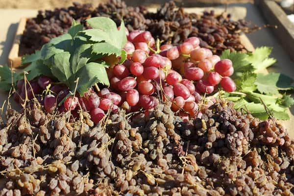 how to make raisins from grapes