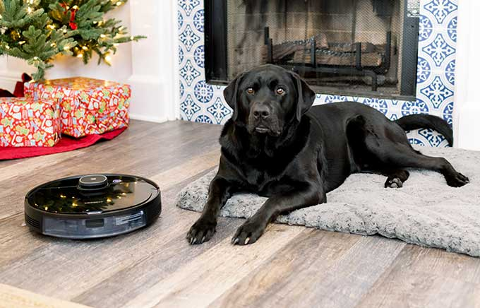 image: black lab laying on floor near Christmas tree and floor vacuum